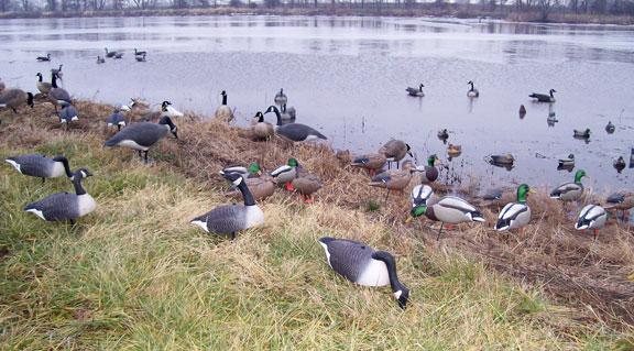 Canada Goose Hunting