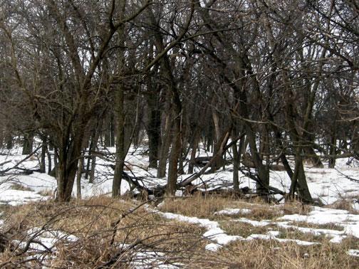 Deer Hunting Scouting