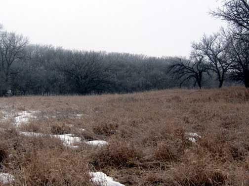 Western Kansas Deer Land